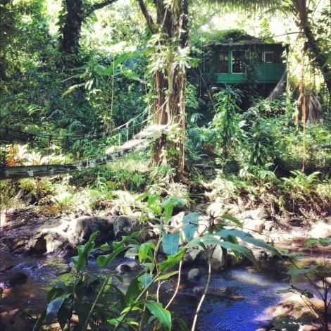jungle-hut